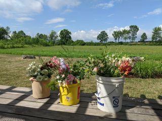 Flower Power VT Farm 1