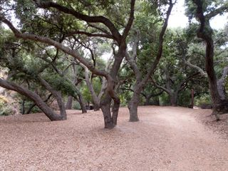 Oak Canyon Nature Center 1