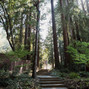 Amphitheatre of the Redwoods at Pema Osel Ling 29