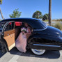 Revvies Luxury Transportation 8
