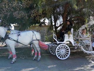 Cindy Cinderella Carriages 3