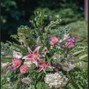 Mountain Oak Florist and Design 11