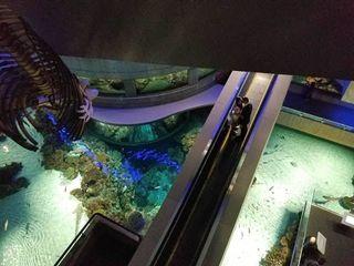 Design Aquarium Kast : National aquarium reviews baltimore md reviews