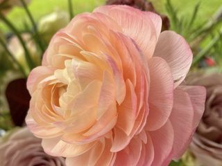 Rose Moss Designs 3
