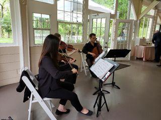 Terra Vista Strings 4