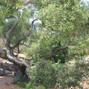 La Cuesta Ranch 19