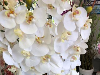 800ROSEBIG Wholesale Wedding Florist 4