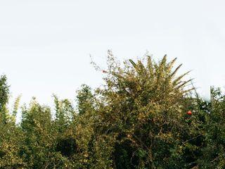 Bright Bird Photography 5