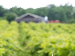 Bluemont Vineyard 2