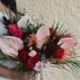 Cherry Blossom 31