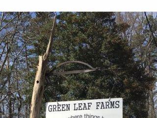 Green Leaf Farms 3