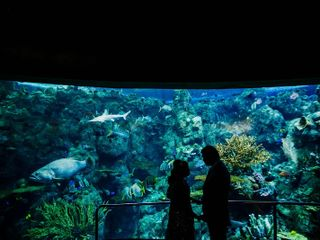 Aquarium of the Pacific 3