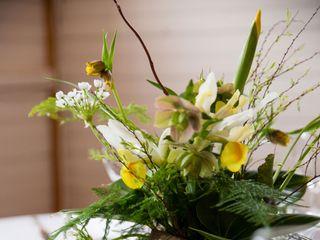CROCUS HALE FLOWERS 4