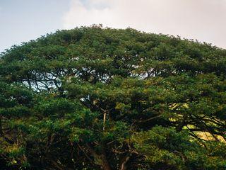 National Tropical Botanical Garden 1