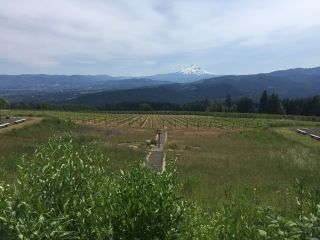 Gorge Crest Vineyards 7