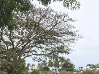 National Tropical Botanical Garden 2
