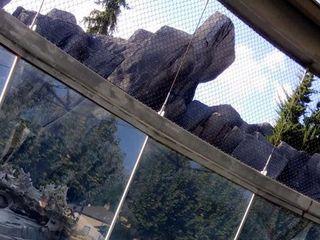 Saint Louis Zoo 1