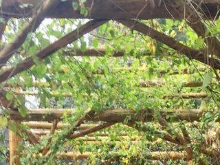 Arrowhead Pine Rose 3