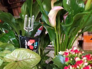 Leiby's Garden and Flower Shop 1