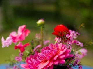 Rosehip Flora 7