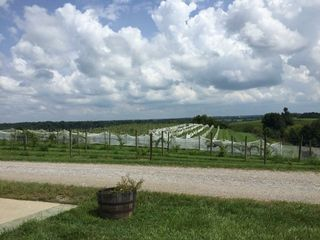 Chenault Vineyards 1