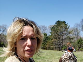 Wing Blade Falconry Events 4