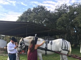 Sweet Southern Horse & Carriage 5