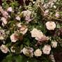 Flor de Casa Designs 17