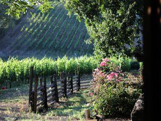 Arista Winery 1