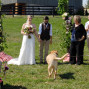 Northern Virginia Marriage Officiant 9