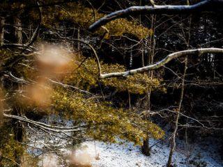 Debbie Segreve Photography 5