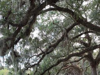Boone Hall Plantation 7