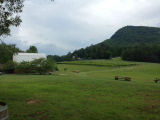 Tiger Mountain Vineyards 1