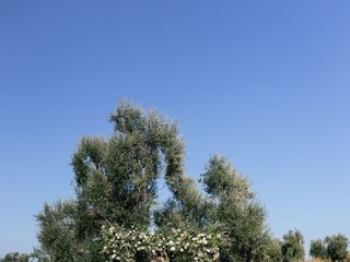 Wedding Planner in Puglia | Wedding Officiant in Italy 1