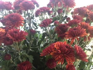 Nunan Florist and Greenhouses, Inc. 2