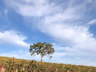 Ella's Vineyard 4