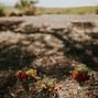 Frampton's Flowers 14