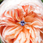 Violette's Flowers 9