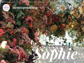 Bird Dog Wedding 7