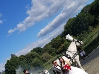 Dream Horse Carriage Company 3