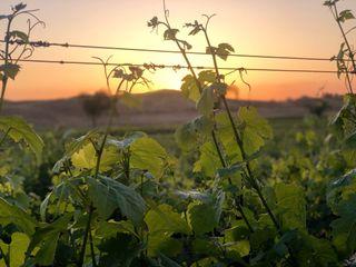 Chapin Family Vineyards 3