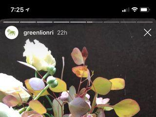 greenlion design 6