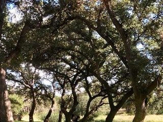 The Addison Grove 4