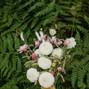 CROCUS HALE FLOWERS 9