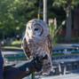 Connecticut's Beardsley Zoo 17