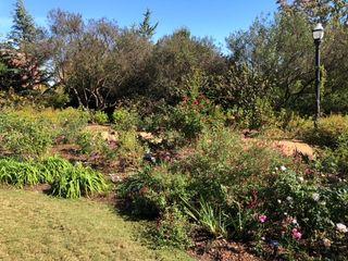 Atlanta Botanical Garden 2