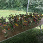 Vera Flora Farm 10
