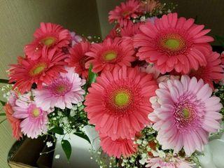 Flowers 'n' Ferns 1