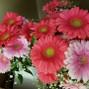 Flowers 'n' Ferns 5