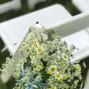 Heavenscent Floral Art 16